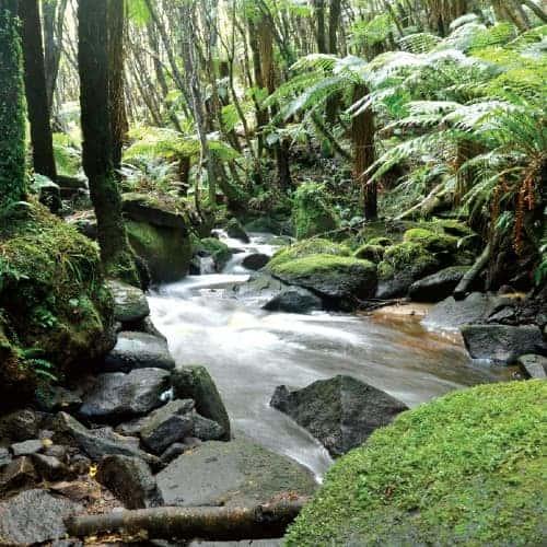 Guided nature walks of Ulva Island and Stewart Island, NZ