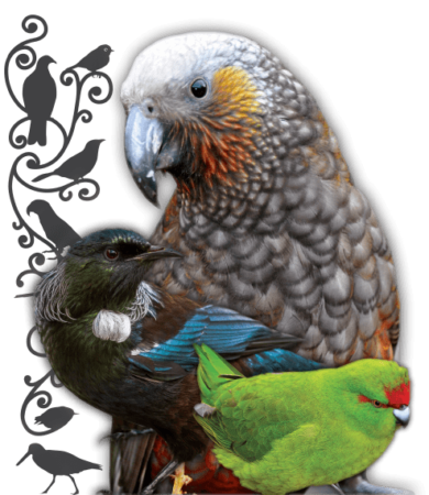 Ulva Island walks - bird sanctuary and forest