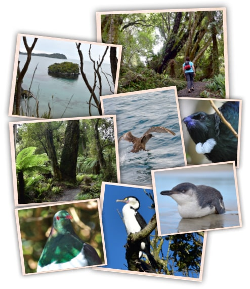 Native Bush walks: Port William, Stewart Island