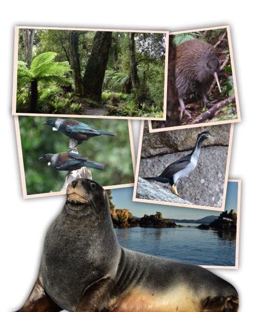 Ulva Island Walks and Wildlife